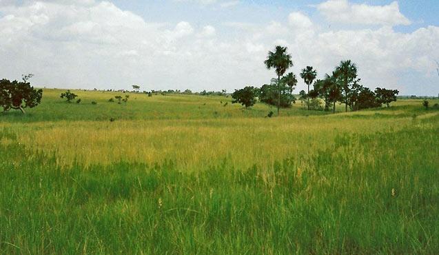 cargill-land-2